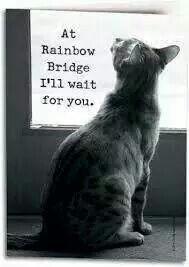 At Rainbow Bridge I'll wait for you.
