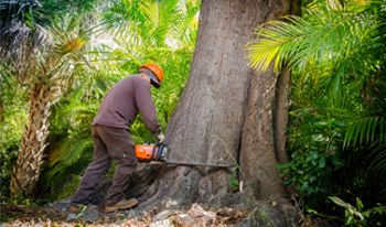 Grow Inc. Tree Removal Service - Naples, Fl #growtreeservice #naples #fortmyers #florida #treeservice