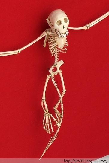 Esqueleto de duende alado.