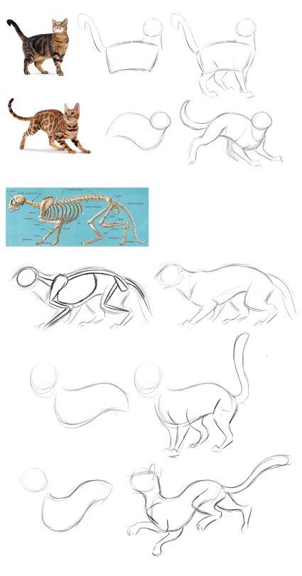 Zeichne # cat   – Art ❤️(Sketches)