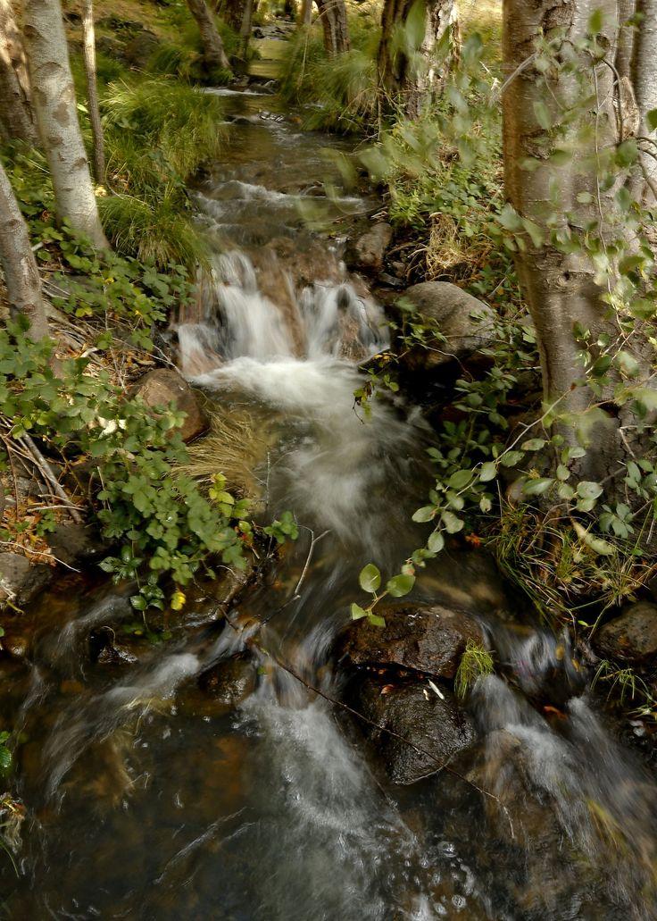Surprise bonanza since Napa earthquake (quake): dry creeks now flowing!!!!!!!!