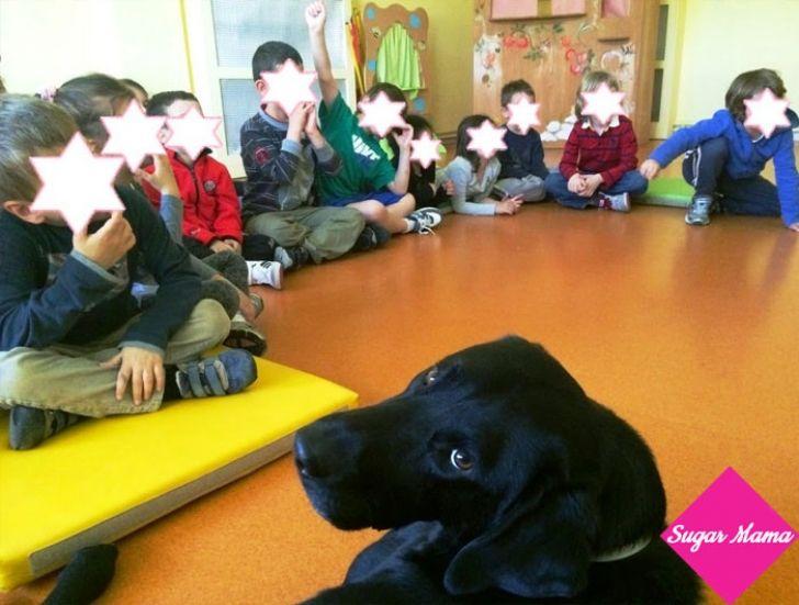 Θεραπεία με σκύλο- F.L.T.~ Μια όμορφη εναλλακτική θεραπεία μέσω ζώων