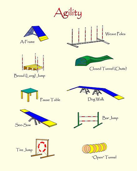 dog agility equipment | Agility Equipment by Brad A. Thomas