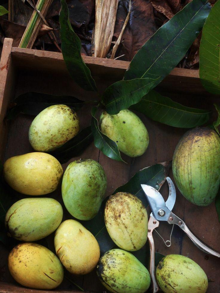 Coconut basil seeds agar with mango and cinnamon