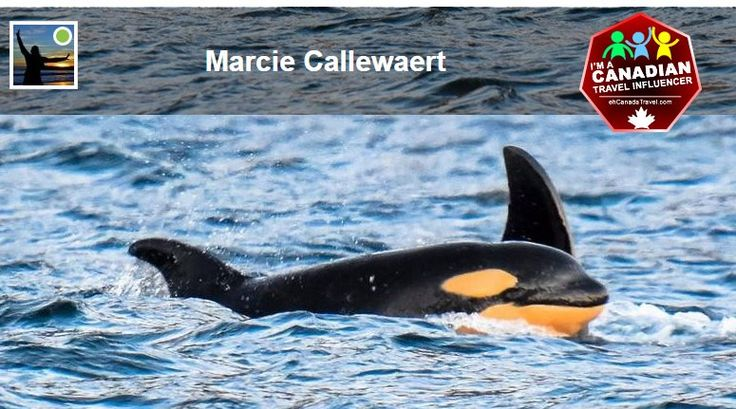 Top Weekly #Canada150 #CanadaTravelInfluencer Post: #Orcas in Bedwell Sound by @mecphotography