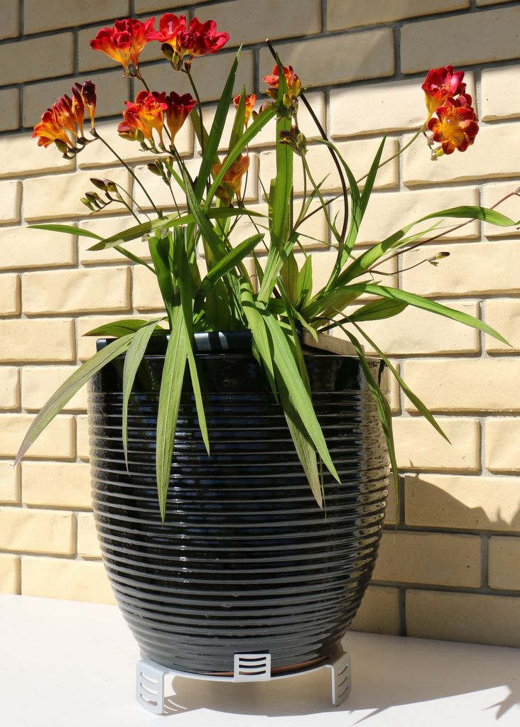 Our plant pot stand in use