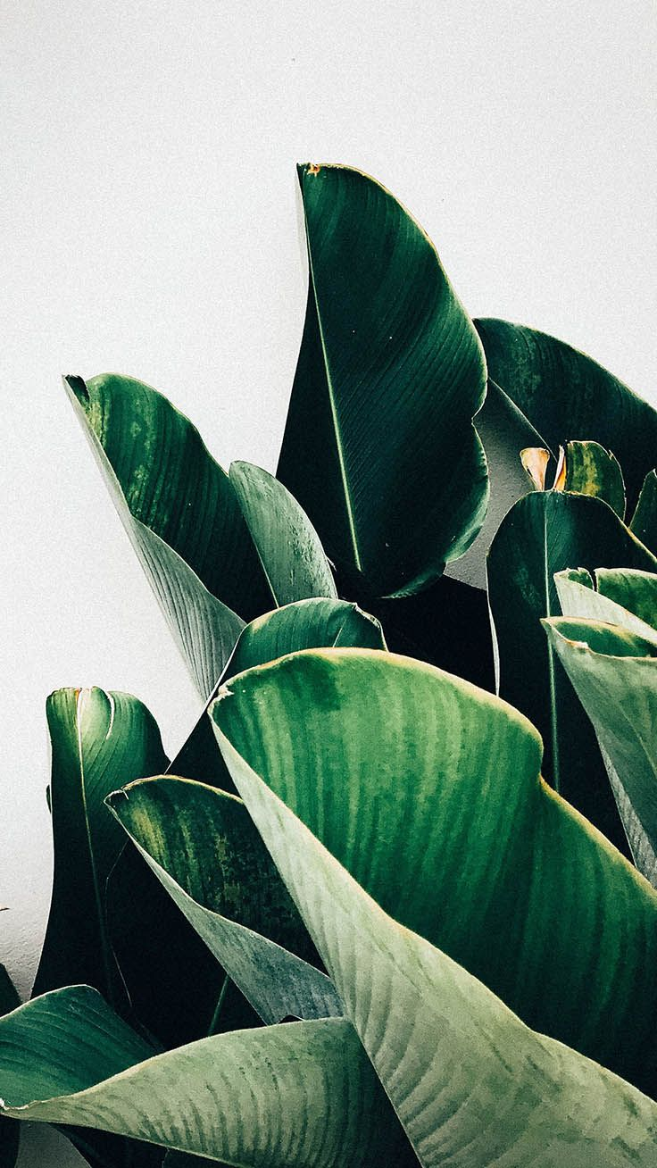 12 Botanical Iphone Xs Max Wallpapers Preppy Wallpapers Preppy Wallpaper Iphone Wallpaper Plants Plant Wallpaper