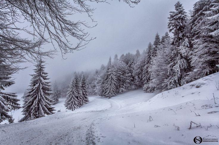 Winter Tale... - Winter in Bucegi Mountain