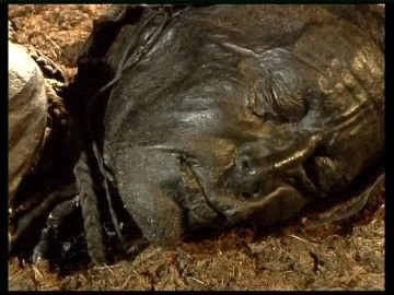 The bog bodies are mummies preserved in the peat bogs, often found in northern Europe, Great Britain and Ireland.