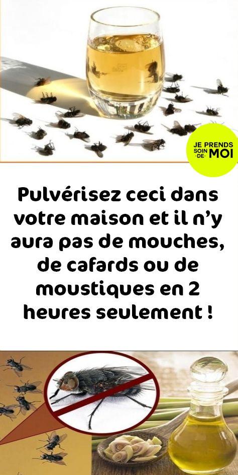 pulv risez ceci dans votre maison et il n y aura pas de mouches de cafards ou de moustiques en. Black Bedroom Furniture Sets. Home Design Ideas