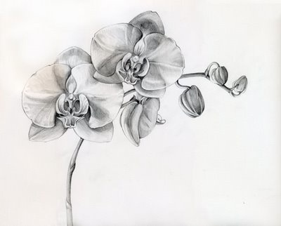 orchids are my favorite and this is nicely drawn to me and the shading is amazing