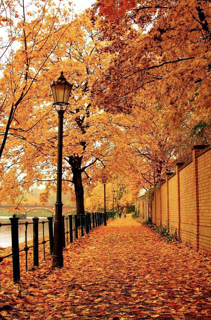Stunning Autumn Walk Berlin Germany