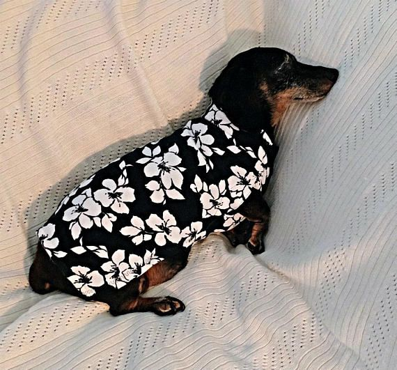 Dachshund sweater of cotton blend knit fabric handcrafted to