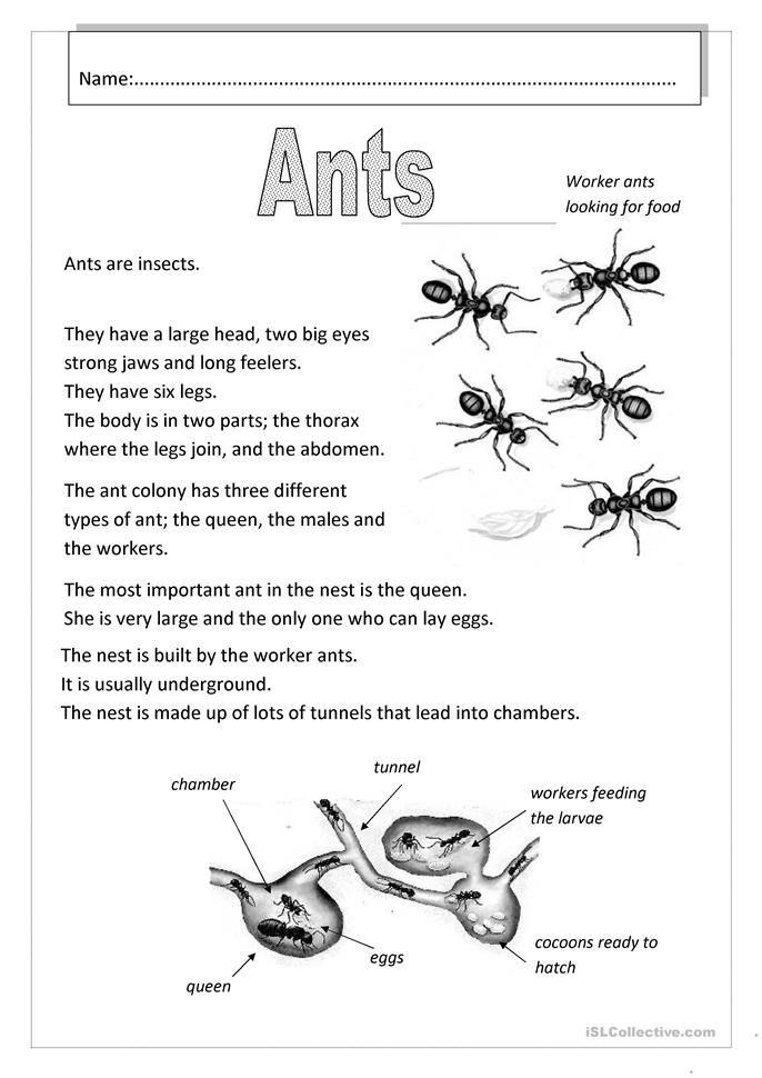 Pin On Insect Life Cycle Lesson