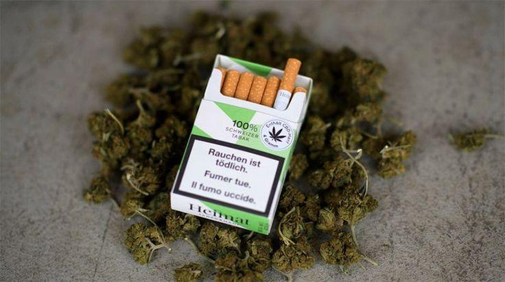 Legális kannabisz cigi jön az áruházakba július 24-től!
