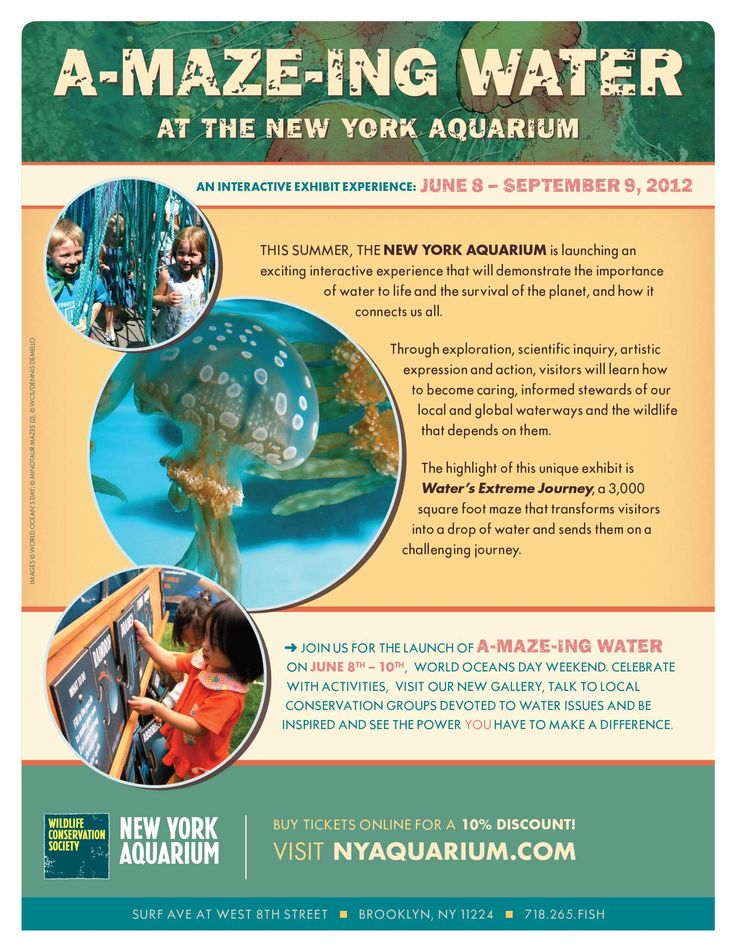 A-MAZE-ING Water at NY Aquarium - lots of fun and interactive exhibits for kids and adults alike!Fun Activities,  Website, Education Ideas, Aquariums, Adult Alike, York, Interactive Exhibitions, A Maze Water, Cities Vacations