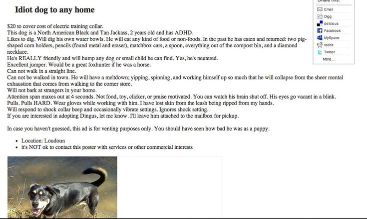 Best of Craigslist. Please Adopt Dingus. We cried from