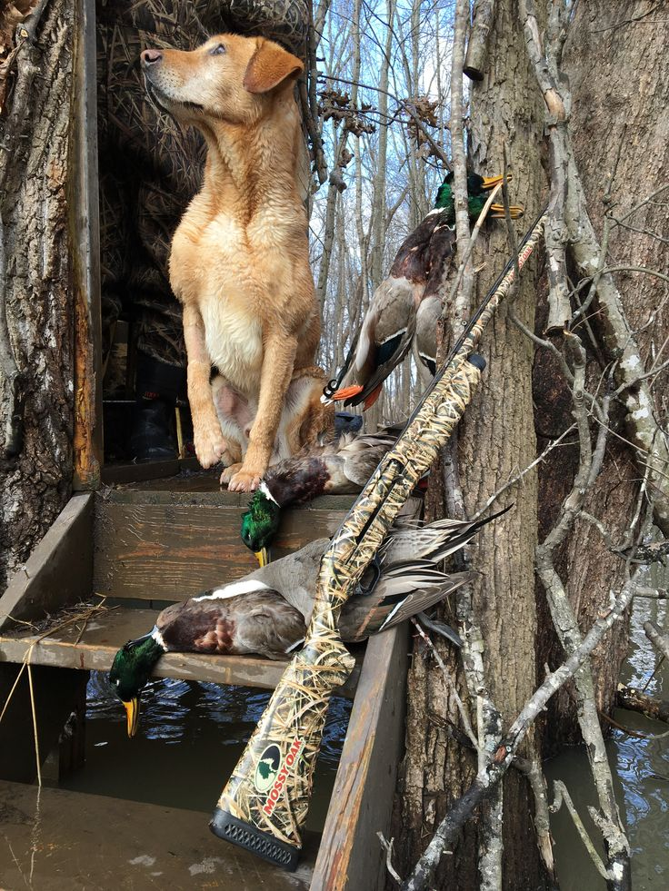 I have always been an avid duck and goose hunter and take time every fall to go out on the weekends and when I have some extra time. My family has always gone hunting together and some of my favorite memories are from these times.