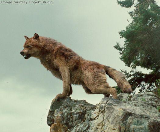 A twilight wolf