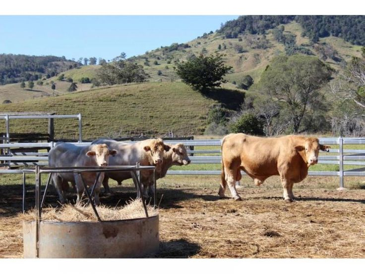 713 Acres , 18klms Gympie , c/c 400 adult cattle