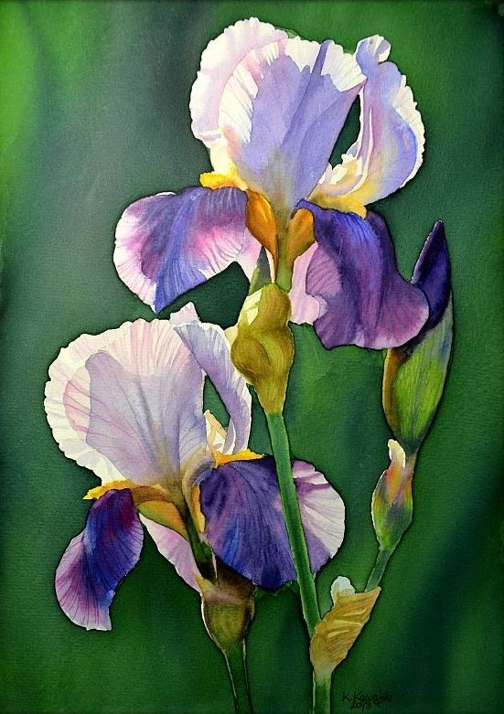 Watercolor painting - Purple iris