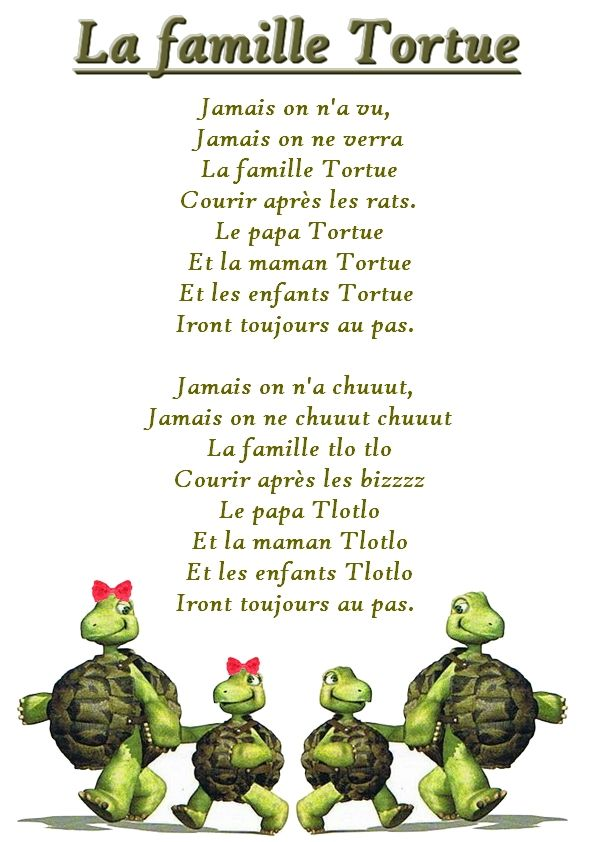 La maternelle de laur ne la famille tortue cr che for Avoir une tortue a la maison