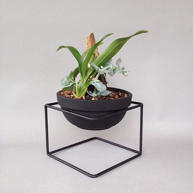 Orquídeas de venta en @rompeolascafe #piezaúnica #decor #decoracion #decoration #indoorplants #orchids #orquidea #cafeteria #colonianapoles #cdmx #mexico #plants #pantstagram #black #maceta #barro #naturalesmejor #rau #raumx