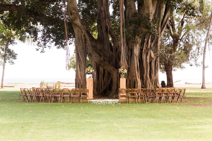 Banyan Tree background with bamboo folding chairs at Waimea Plantation Cottages on Kauai, Hawaii.  Kauai Wedding Planner | Legacy Events Kauai
