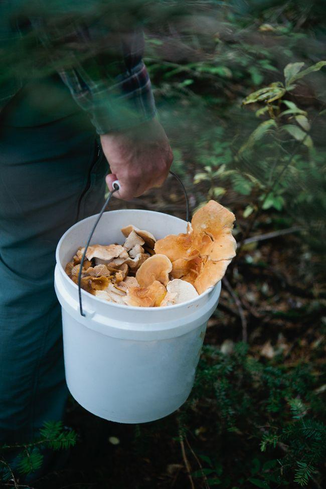 Best 25 mushroom guide ideas on pinterest mushroom identification mushroom and edible mushrooms - Wild mushrooms business ideas ...