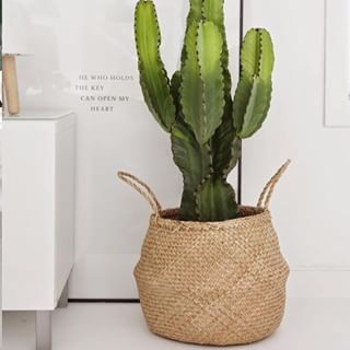 Cactus in a basket, white gloss IKEA credenza