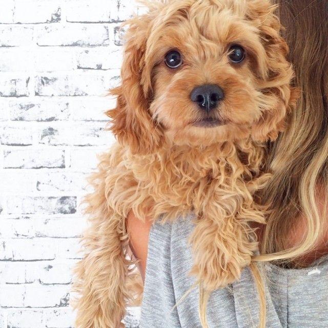 25+ best ideas about Doge original on Pinterest | Doge dog ...