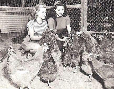 0 Gloria DeHaven  with ava gardner feeding chicken