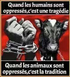 Une vie à le même prix, qu'elle soit humaine ou animale. Respectez ça'  !