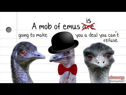 if birds of a feather flock together they don t learn enough Start studying psychportal mastery questions (chapter 13) learn vocabulary, terms, and more with flashcards b birds of a feather flock together c faces of both sexes are judged to be more attractive when they.