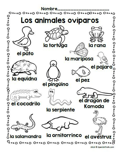 Los animales oviparos (Oviparous Animals in Spanish