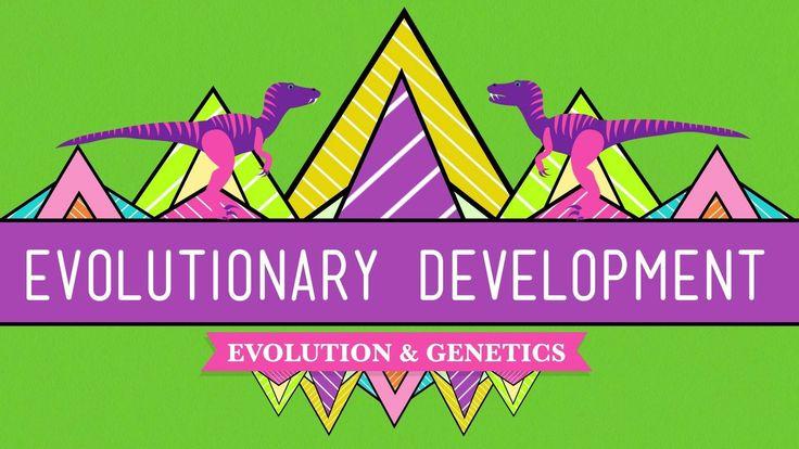 AccomplishedOfficial Evidence Of Evolution Worksheet ...