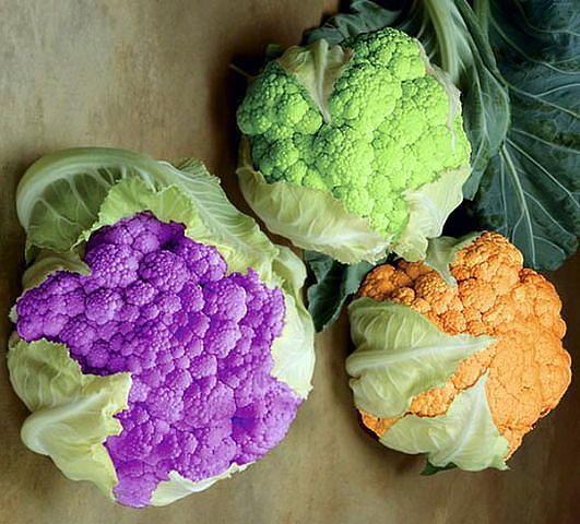 Как вырастить цветную капусту сочной и крупной