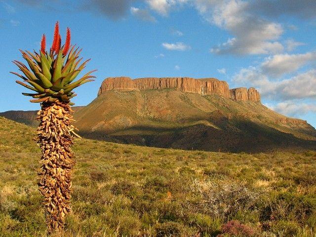 Karoo landscape.