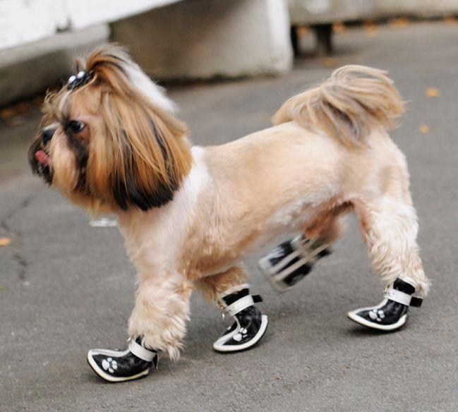 Заказать обувь для собак