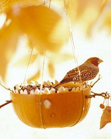 Martha Stewart pumpkin bird feeder. Children can help after the cutting is done. Bird watching. Science.