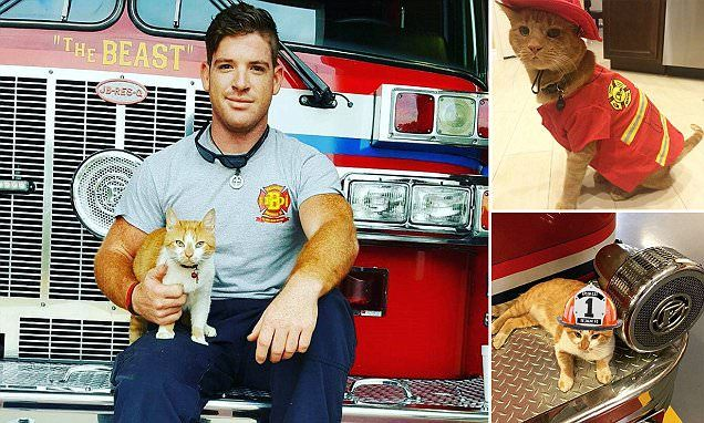 Two years ago, a ginger tabby walked onto the property of the Belmont Fire Department in Greenville, South Carolina. Station engineer Jordan Lide, 26, took him in.