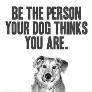Good Advice :))Best Friends, Quote, So True, Dogs Owners, Funny Thoughts, Be Better, Good Advice, Dogs Love, Animal
