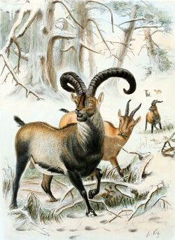 "In 2009 Pyrenean ibex DNA was used in a cloning project in an attempt to ""de-extinct"" the species which resulted in the birth of a baby buca..."