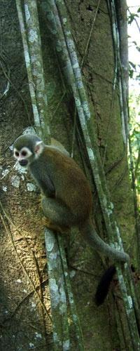turismo isla de los micos amazonas colombia