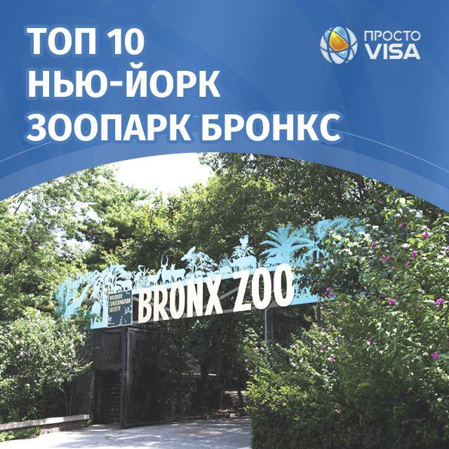 ЗООПАРК БРОНКСА  В Нью-Йоркском районе Бронкс и находится зоопарк, его площадь составляет 107 гектар. На сегодня на территории обитает 650 видов животных, а всего особей 4000 Зоопарк состоит из таких зон:  Мир птиц, Африканские равнины, Мир обезьян, Мир рептилий, Мадагаскар, Тигриная гора, Монорельс над дикой Азией, Лес горилл Конго, Мир джунглей. #prostovisa #usavisa #New_York #Bronx_Zoo #топ10ньюйорк #простовиза #Нью_Йорк #визавамерику #зоопарк #зоопаркбронкс