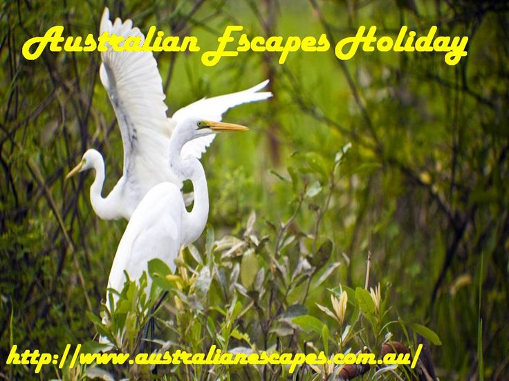 Travel Directions Pty. Ltd. now operates Global Escapes Travel and the new Australian Escapes Holiday & Travel Club following the closure of Accomcorp Pty Ltd in March/April 2016.