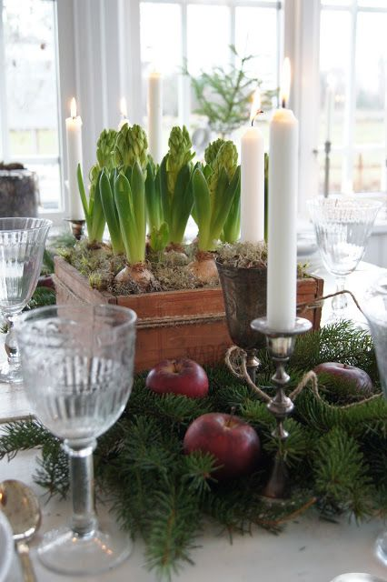 forced bulbs, evergreen boughs, apples, candles — Country Life in Norregård