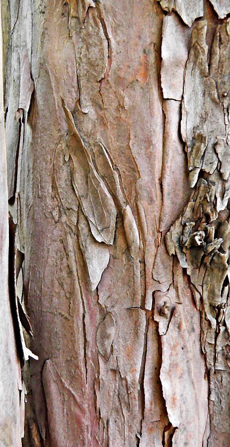 Tree Bark by Sarah Loft