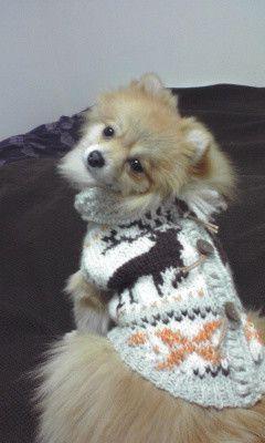 ワンちゃんのサイズをお知らせください。(犬種、胴回り、着丈、首回り)前立ては、飾りになってます。オレンジの部分(ネパール製シルク糸を使用。太さにむらがあり、か...|ハンドメイド、手作り、手仕事品の通販・販売・購入ならCreema。