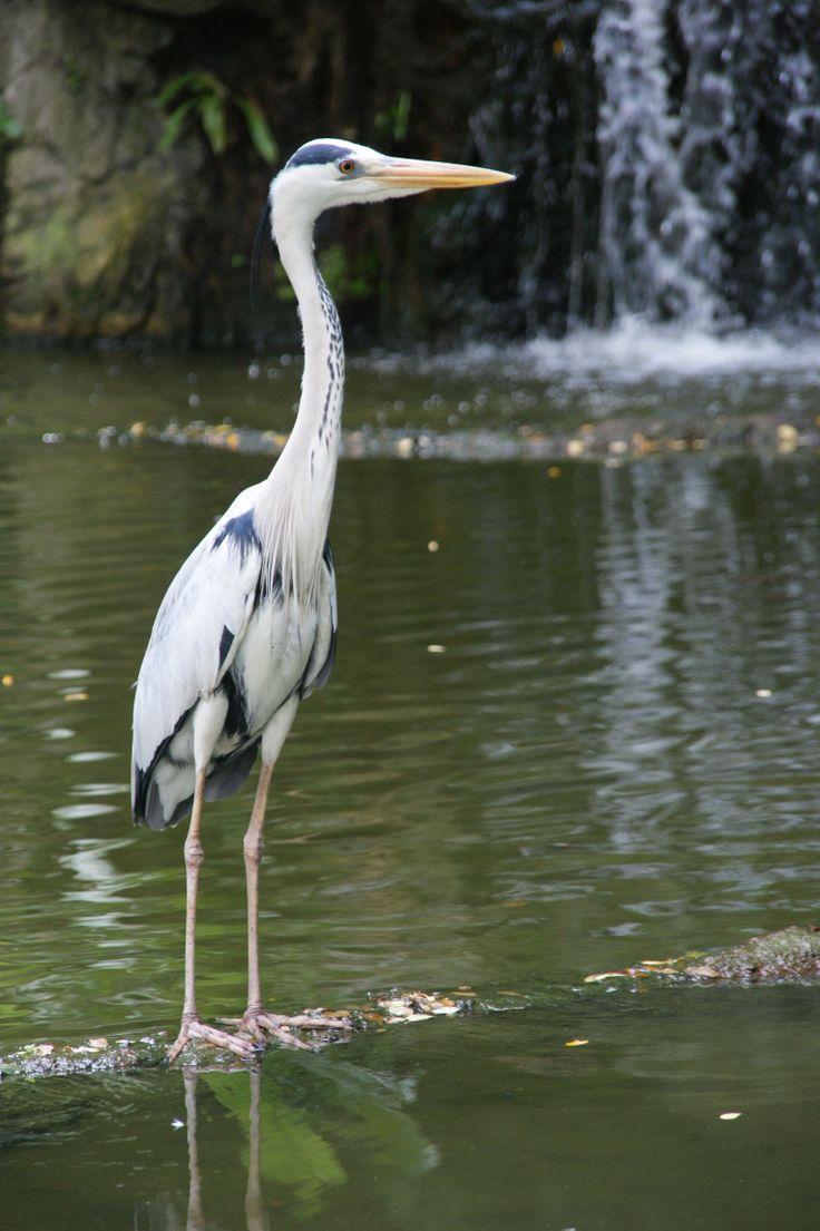 A stork at Jurong Bird Park, Singapore. October 2011